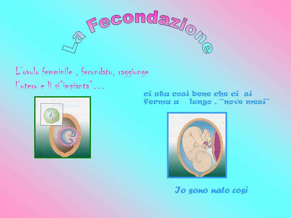 La FecondazioneL'ovulo femminile , fecondato, raggiunge l'utero e lì si impianta … ci sta così bene che ci si ferma a lungo , nove mesi