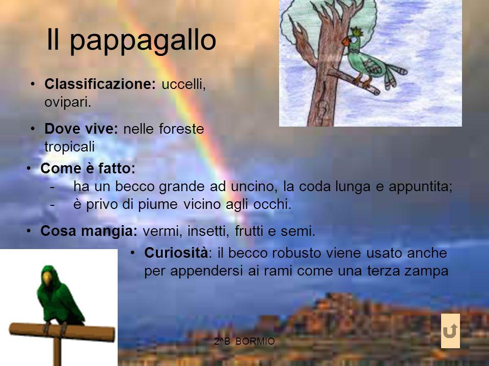 Il pappagallo Classificazione: uccelli, ovipari.