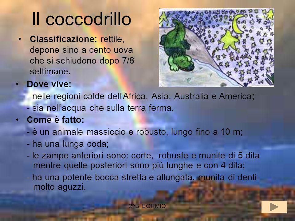 Il coccodrillo Classificazione: rettile, depone sino a cento uova che si schiudono dopo 7/8 settimane.