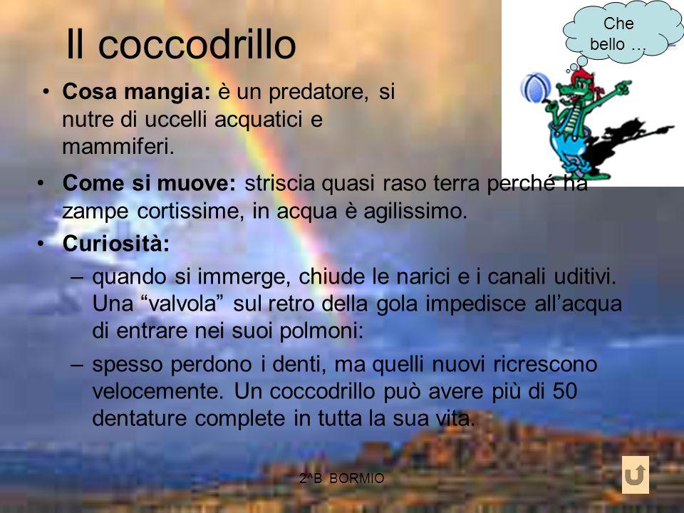Il coccodrillo Che bello … Cosa mangia: è un predatore, si nutre di uccelli acquatici e mammiferi.