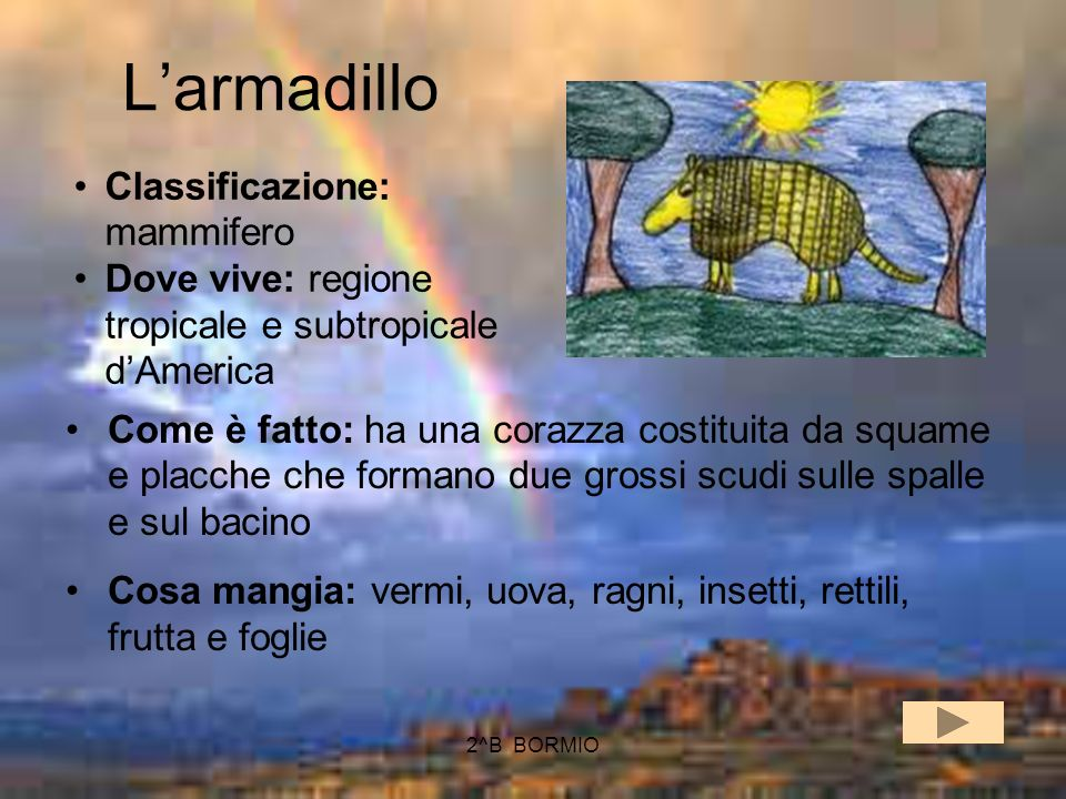 L'armadillo Classificazione: mammifero
