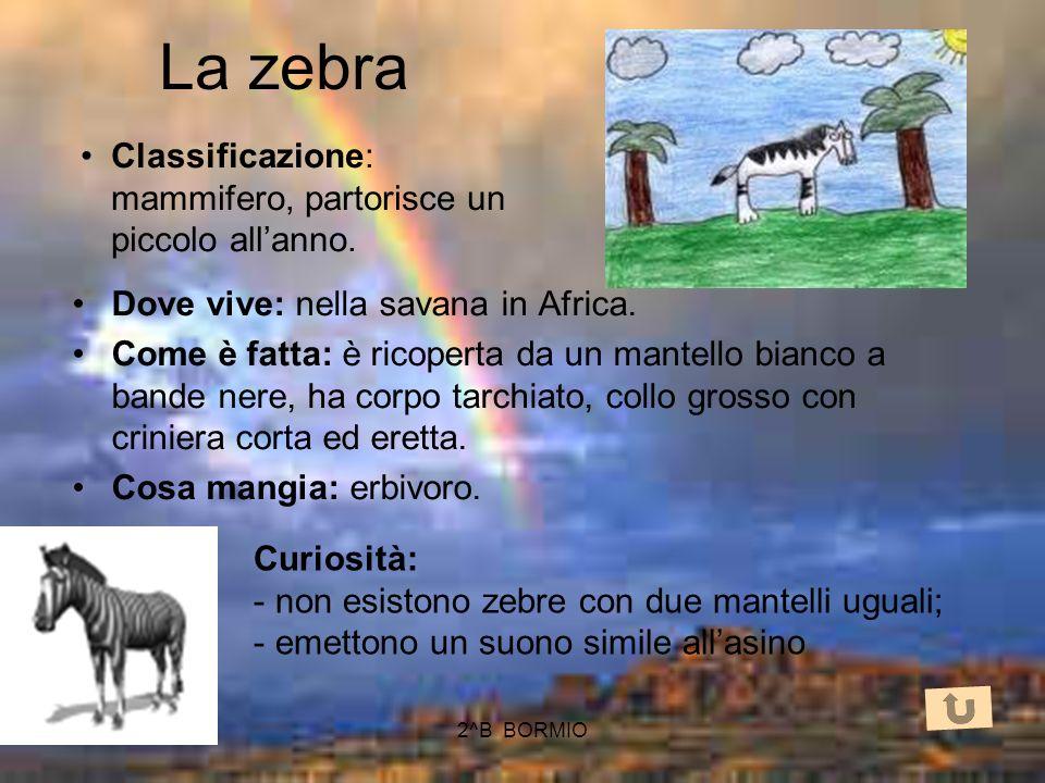 La zebra Classificazione: mammifero, partorisce un piccolo all'anno.