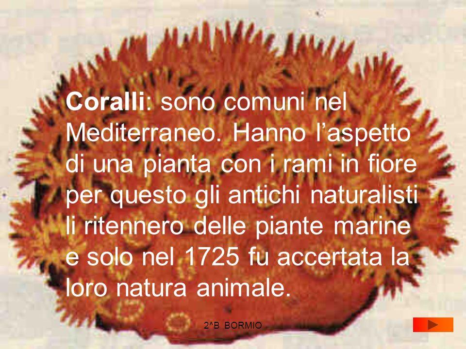 Coralli: sono comuni nel Mediterraneo