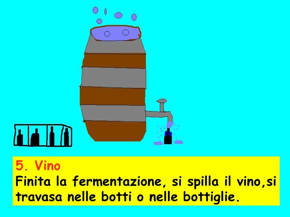 5. Vino Finita la fermentazione, si spilla il vino,si travasa nelle botti o nelle bottiglie.