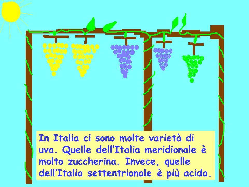In Italia ci sono molte varietà di uva