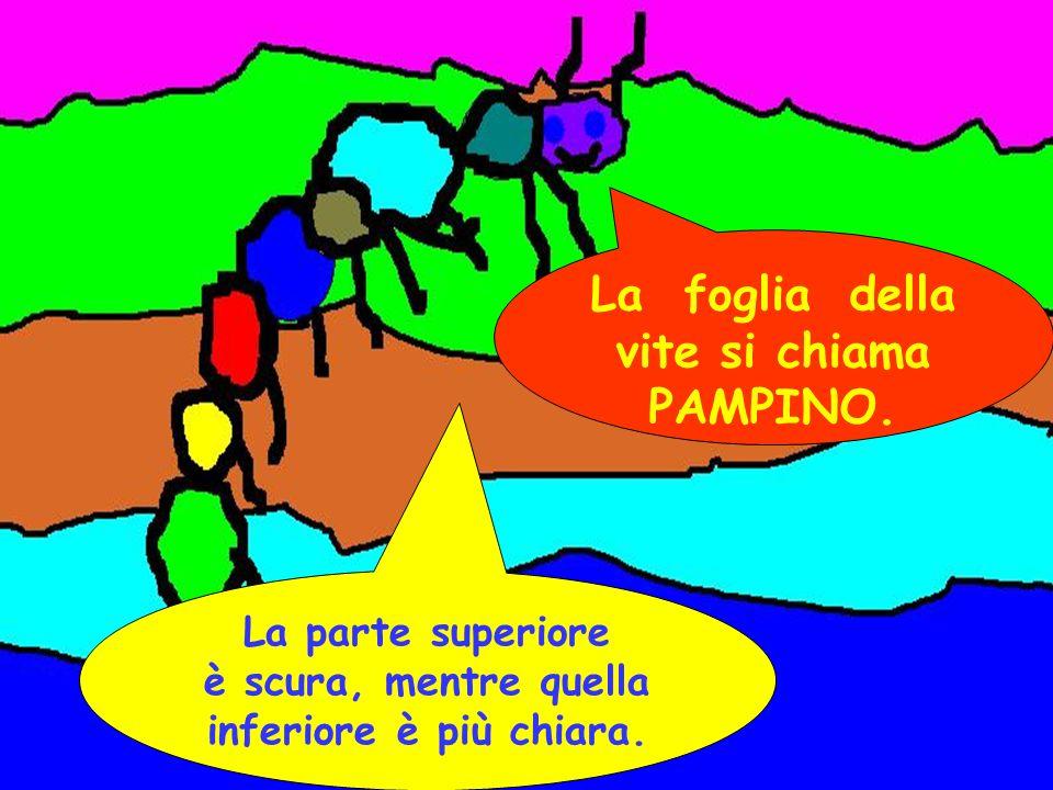 La foglia della vite si chiama PAMPINO.