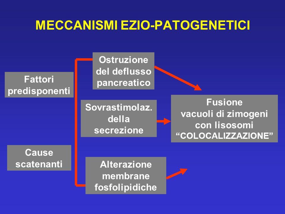 MECCANISMI EZIO-PATOGENETICI