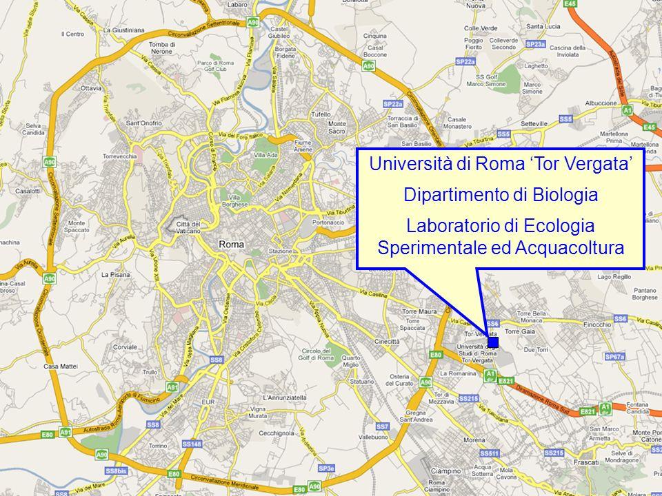 Università di Roma 'Tor Vergata'