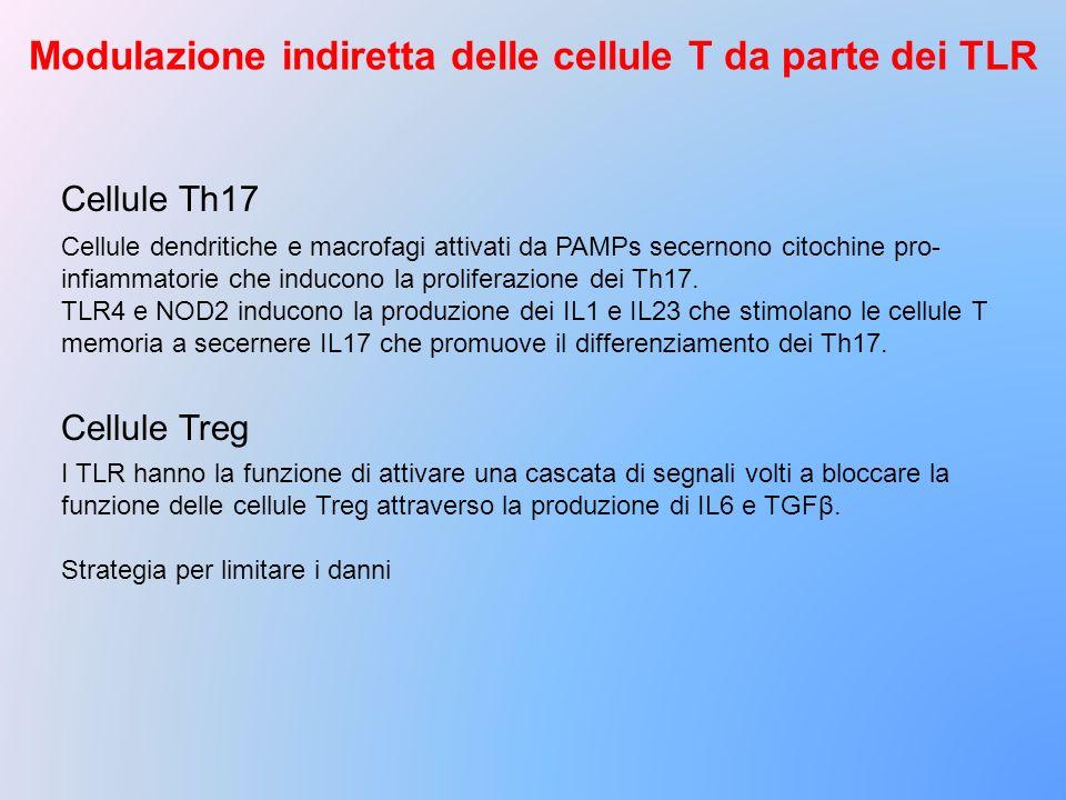 Modulazione indiretta delle cellule T da parte dei TLR