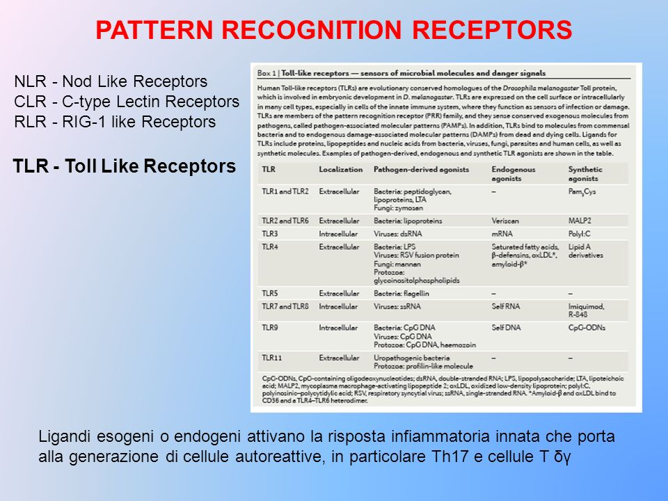 PATTERN RECOGNITION RECEPTORS
