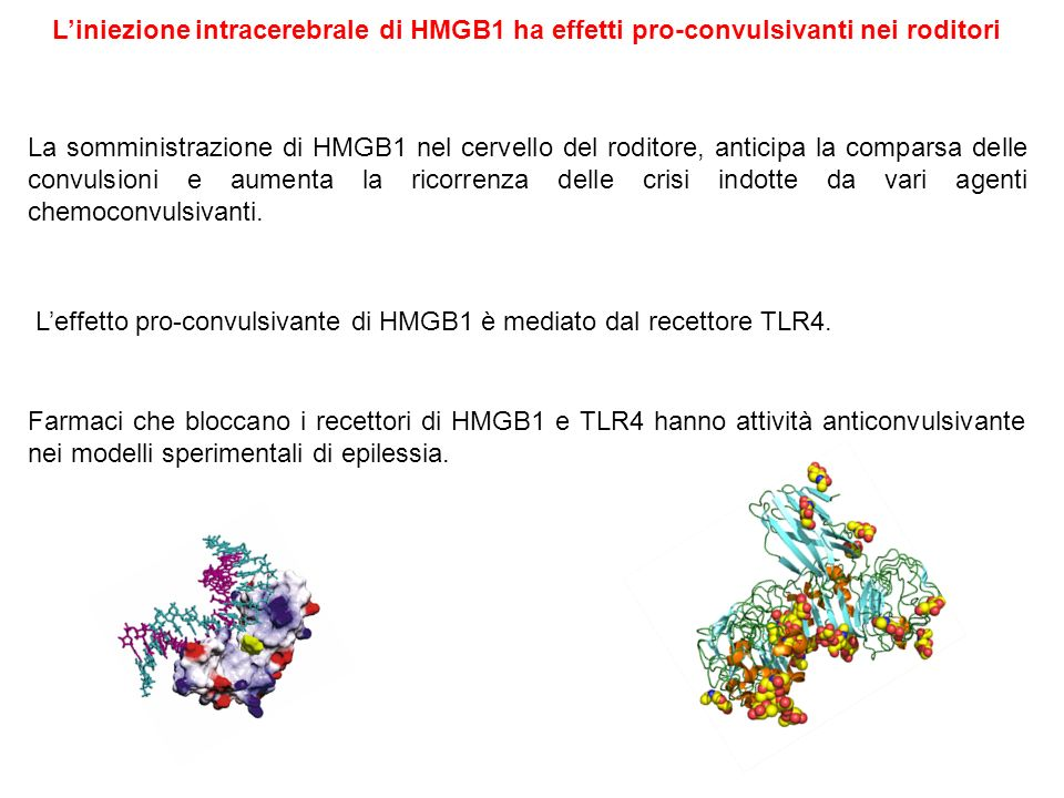 L'iniezione intracerebrale di HMGB1 ha effetti pro-convulsivanti nei roditori