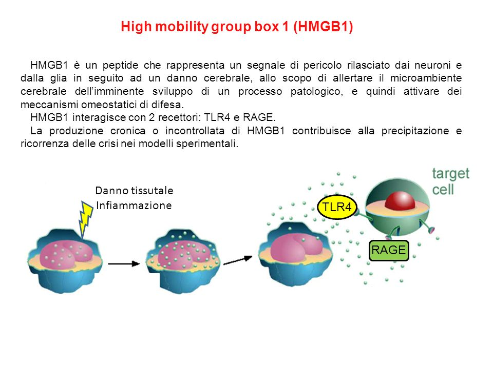 High mobility group box 1 (HMGB1)