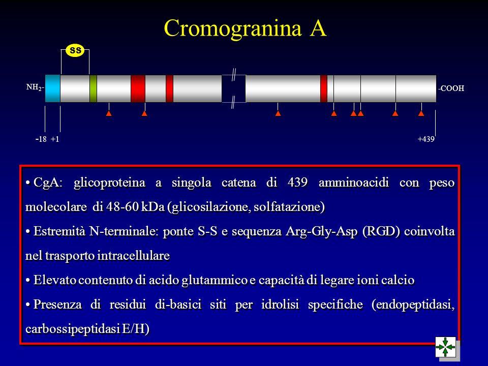 Cromogranina A SS. NH2- -COOH. -18 +1 +439.