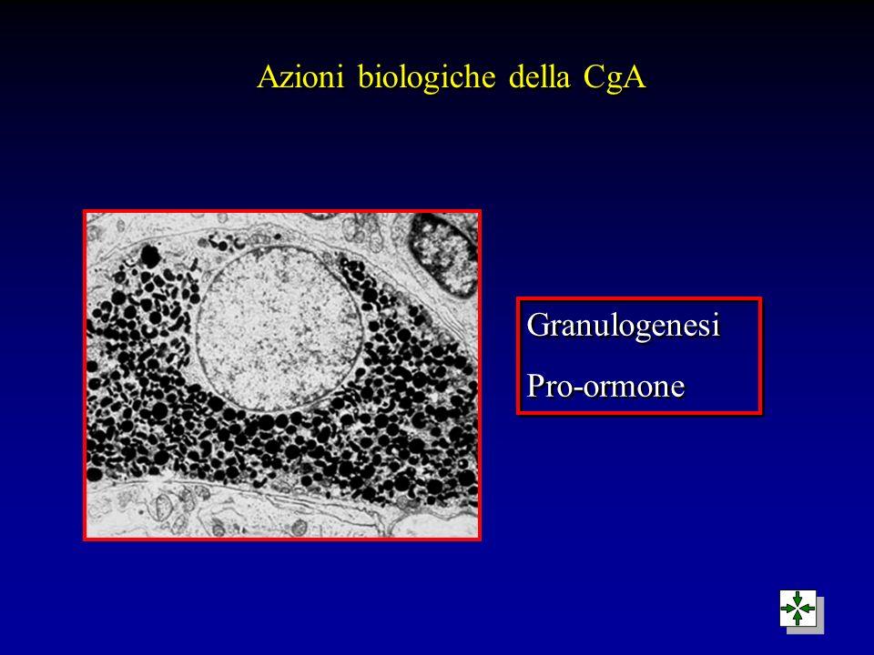 Azioni biologiche della CgA