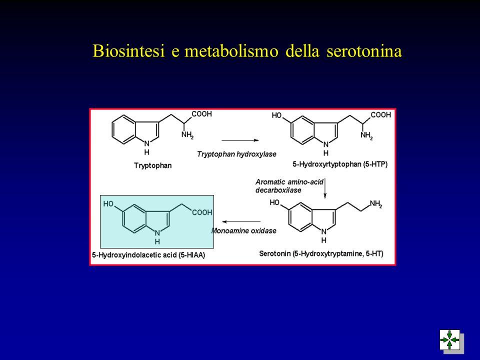 Biosintesi e metabolismo della serotonina