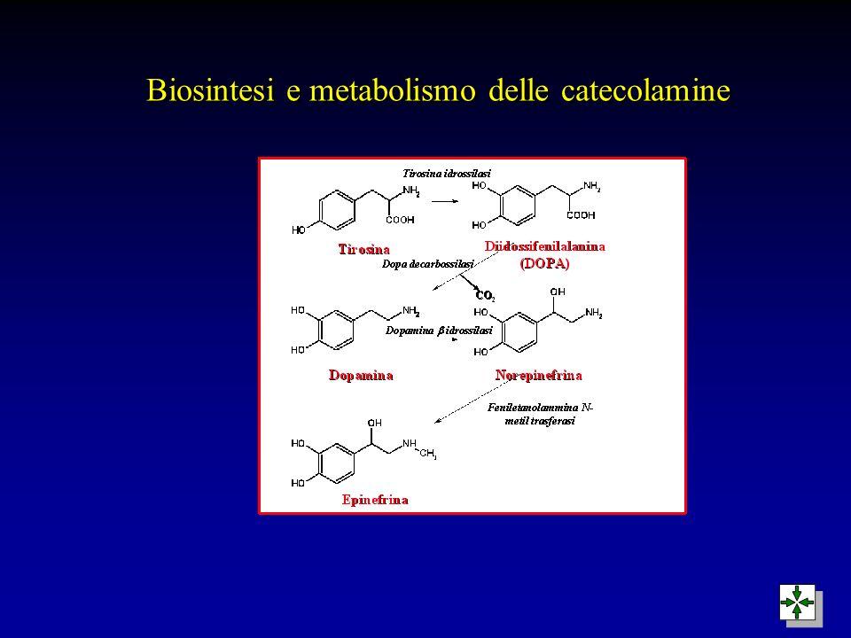 Biosintesi e metabolismo delle catecolamine