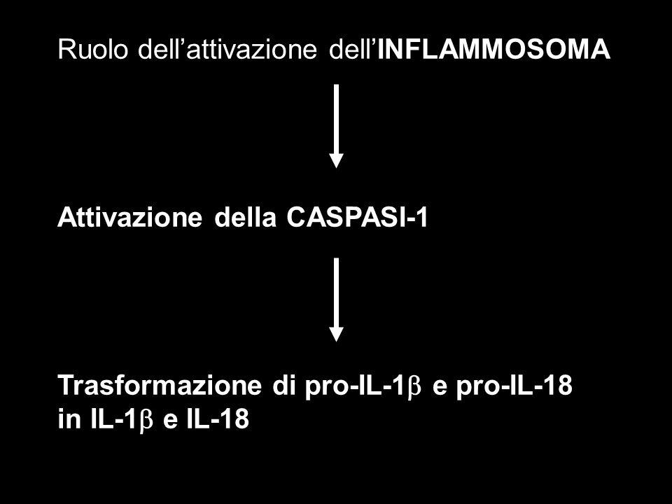 Ruolo dell'attivazione dell'INFLAMMOSOMA