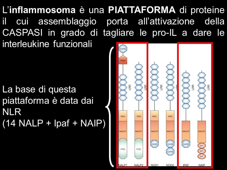 L'inflammosoma è una PIATTAFORMA di proteine il cui assemblaggio porta all'attivazione della CASPASI in grado di tagliare le pro-IL a dare le interleukine funzionali