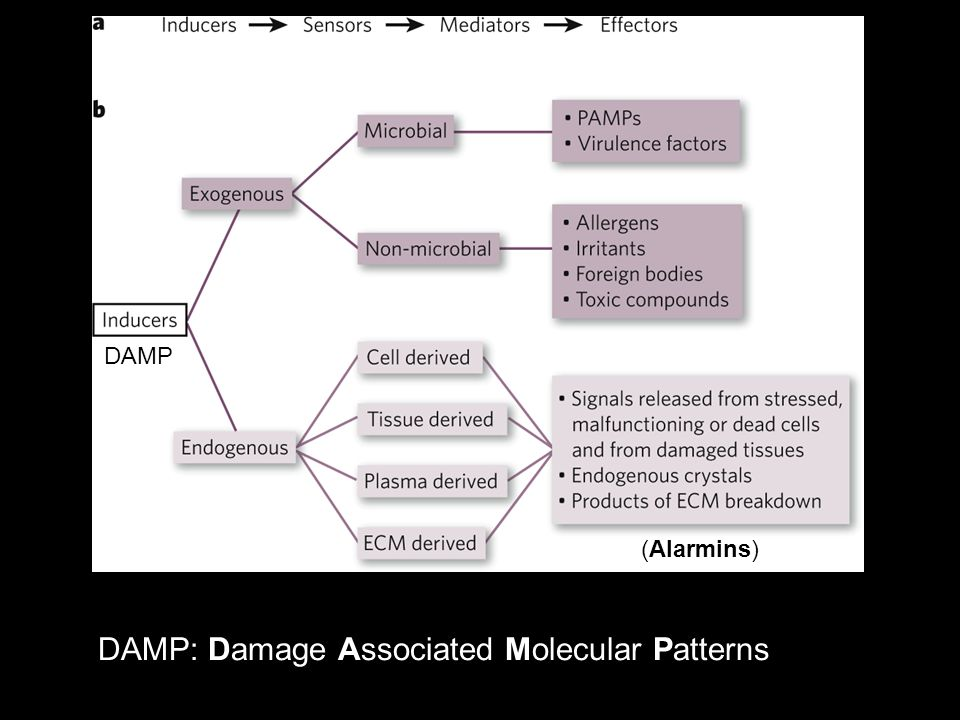 DAMP: Damage Associated Molecular Patterns
