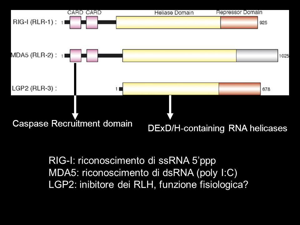 RIG-I: riconoscimento di ssRNA 5'ppp
