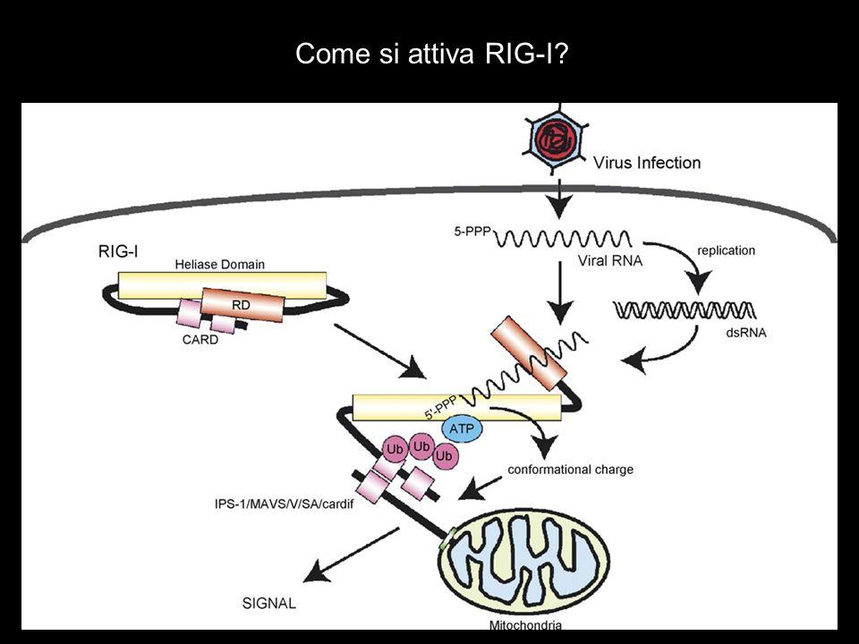 Come si attiva RIG-I