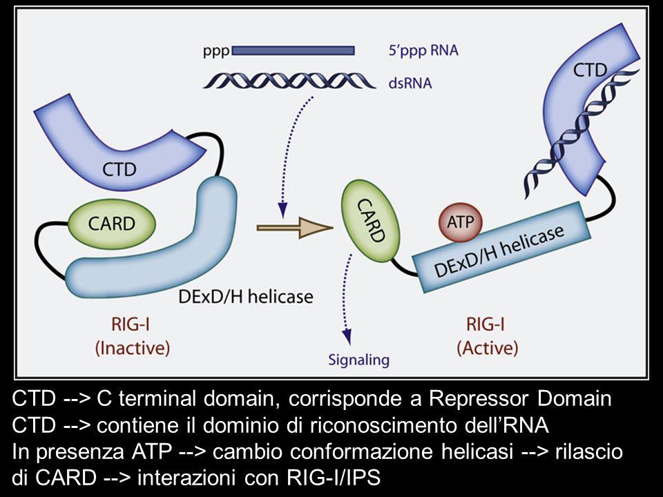 CTD --> C terminal domain, corrisponde a Repressor Domain