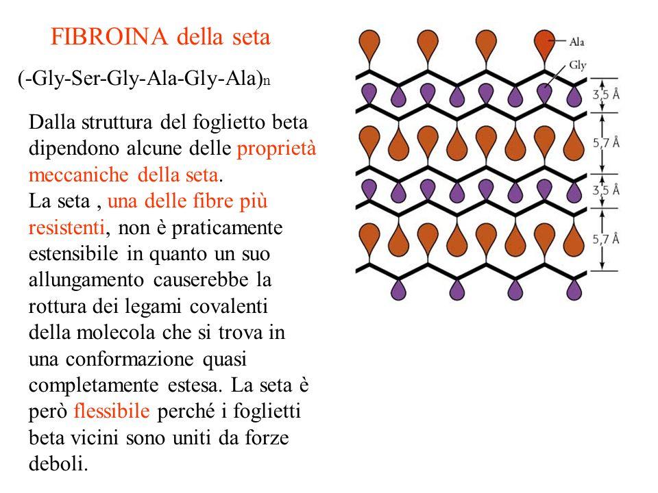 FIBROINA della seta (-Gly-Ser-Gly-Ala-Gly-Ala)n