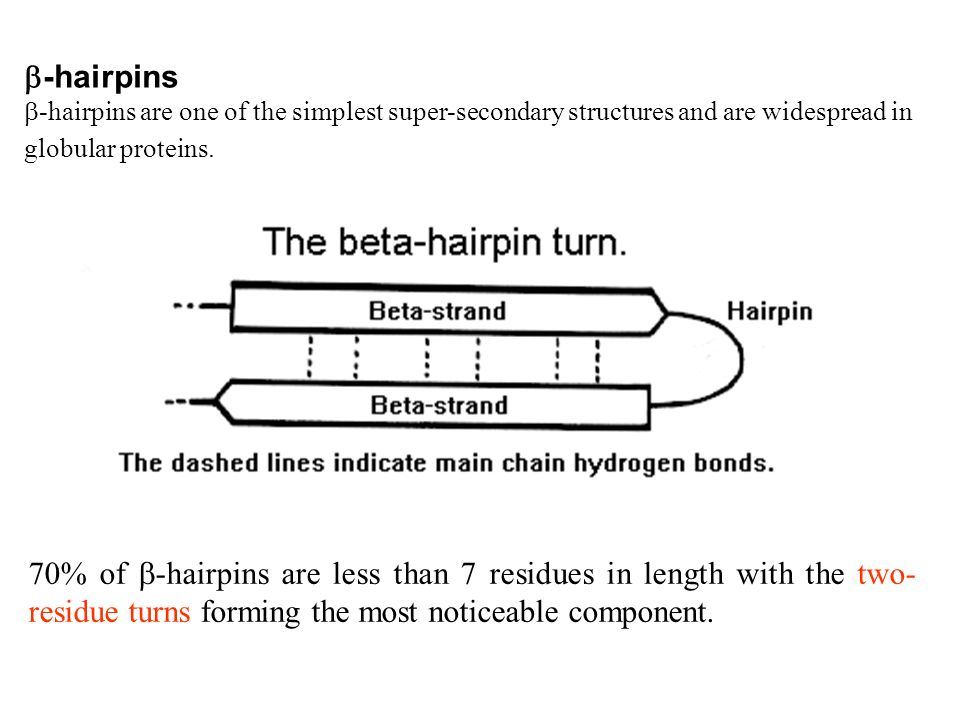-hairpins -hairpins are one of the simplest super-secondary structures and are widespread in globular proteins.