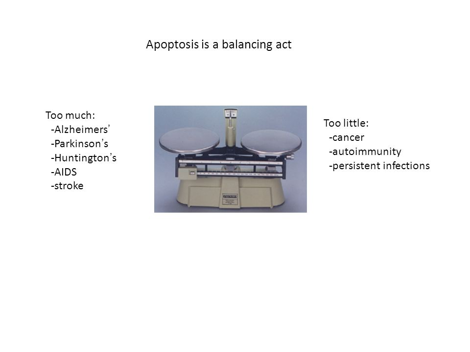 Apoptosis is a balancing act