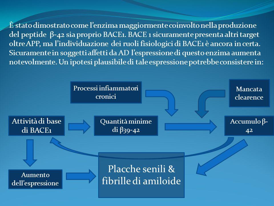 Placche senili & fibrille di amiloide