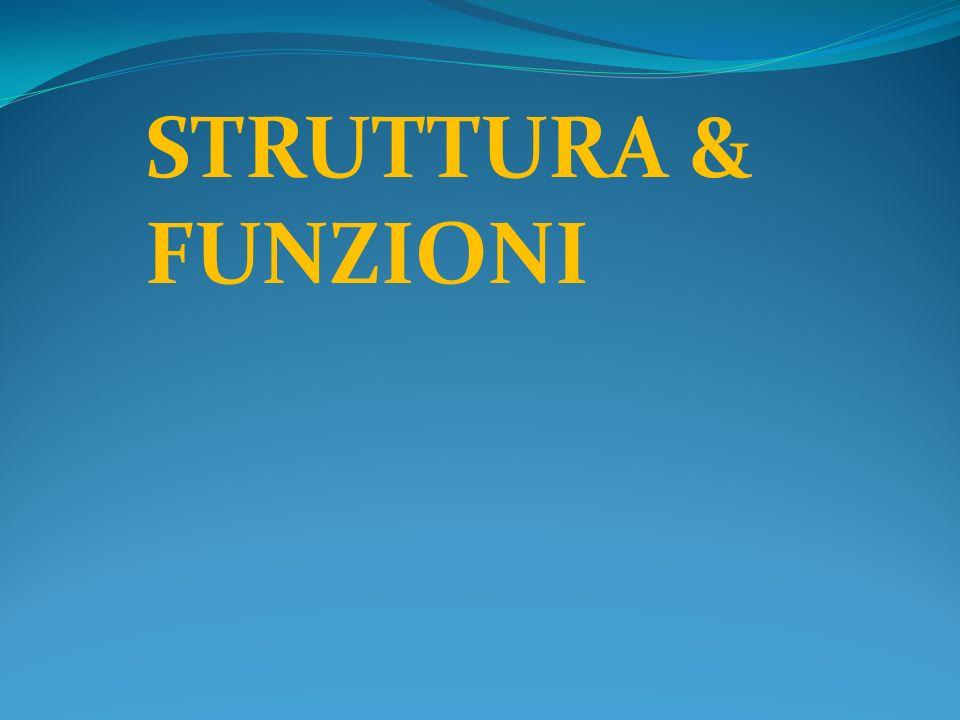 STRUTTURA & FUNZIONI