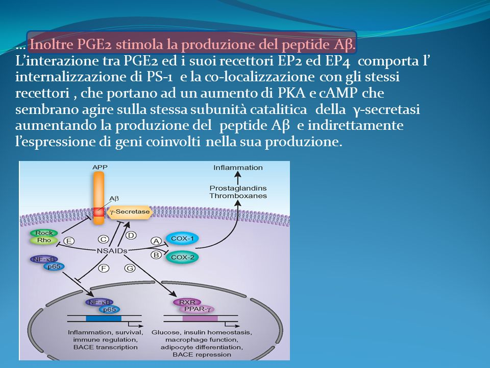 … Inoltre PGE2 stimola la produzione del peptide Aβ