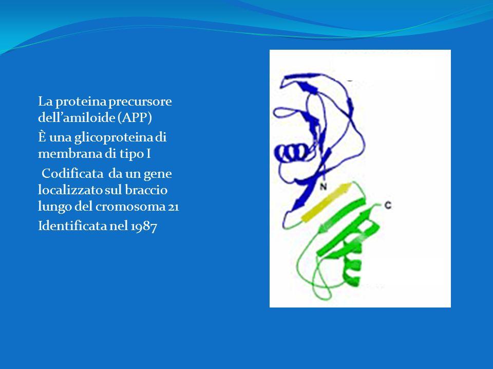 La proteina precursore dell'amiloide (APP)