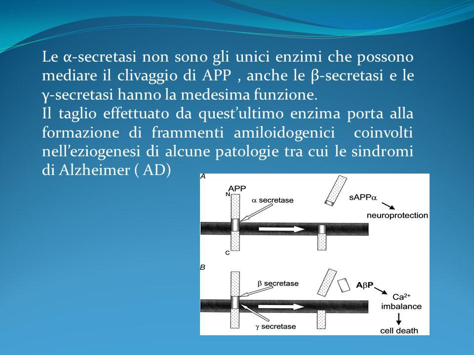 Le α-secretasi non sono gli unici enzimi che possono mediare il clivaggio di APP , anche le β-secretasi e le γ-secretasi hanno la medesima funzione.