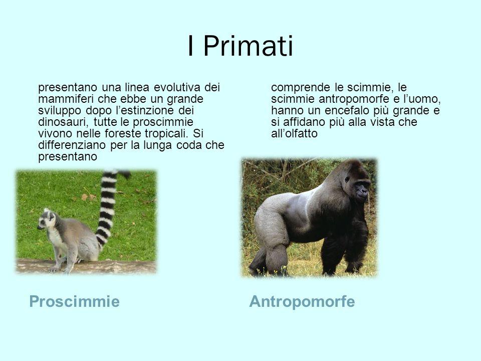 I Primati Proscimmie Antropomorfe
