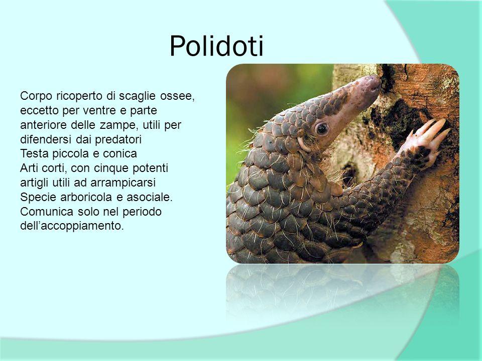Polidoti Corpo ricoperto di scaglie ossee, eccetto per ventre e parte anteriore delle zampe, utili per difendersi dai predatori.