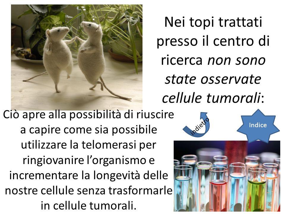 Nei topi trattati presso il centro di ricerca non sono state osservate cellule tumorali: