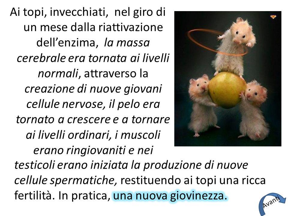 Ai topi, invecchiati, nel giro di un mese dalla riattivazione dell'enzima, la massa cerebrale era tornata ai livelli normali, attraverso la creazione di nuove giovani cellule nervose, il pelo era tornato a crescere e a tornare ai livelli ordinari, i muscoli erano ringiovaniti e nei