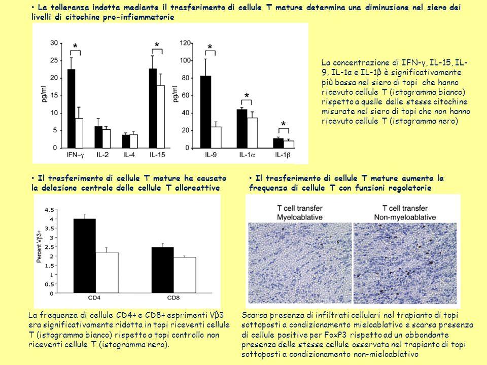 La tolleranza indotta mediante il trasferimento di cellule T mature determina una diminuzione nel siero dei livelli di citochine pro-infiammatorie