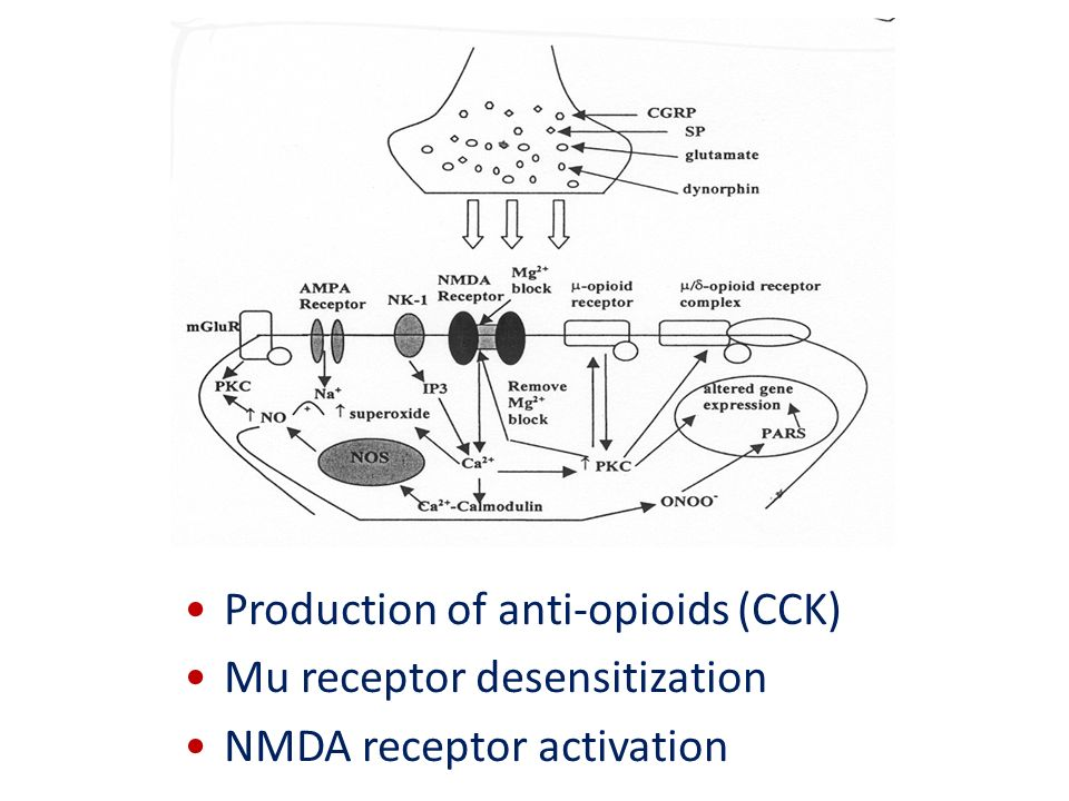 Production of anti-opioids (CCK)