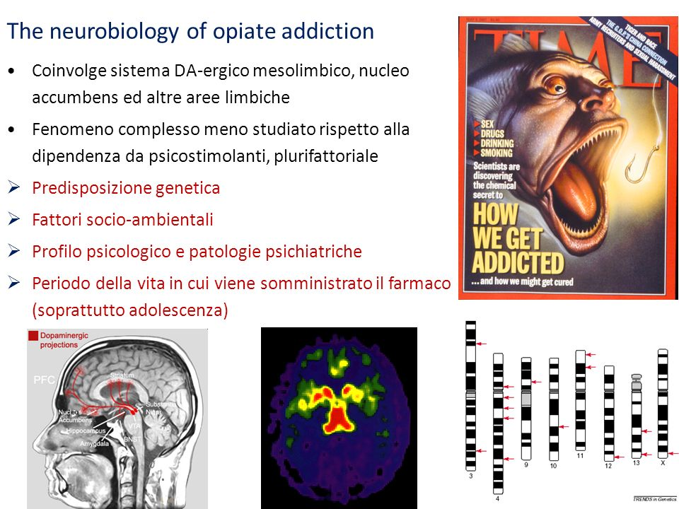 The neurobiology of opiate addiction