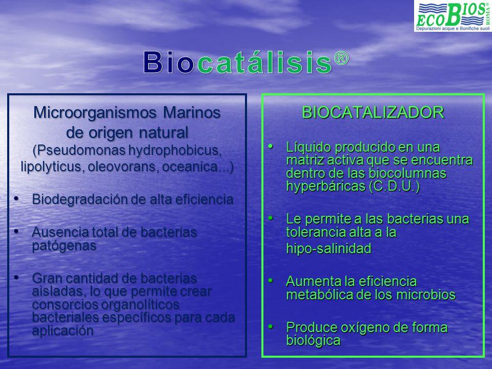 Biocatálisis® Microorganismos Marinos de origen natural BIOCATALIZADOR