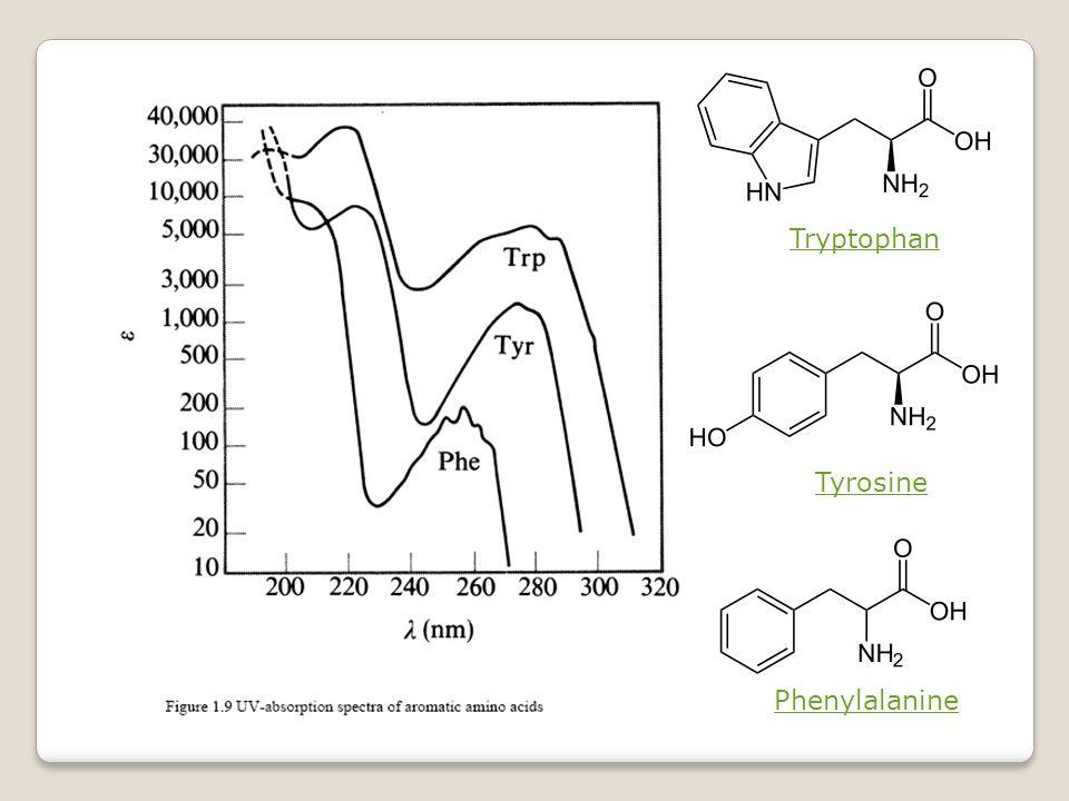 Tryptophan Tyrosine Phenylalanine