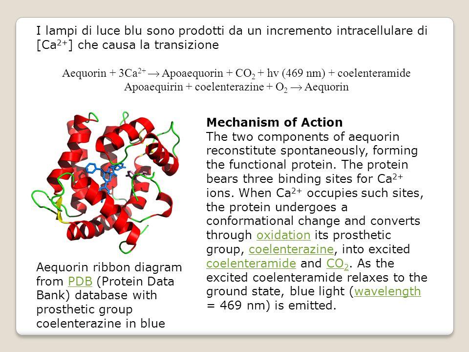 Aequorin + 3Ca2+  Apoaequorin + CO2 + hv (469 nm) + coelenteramide