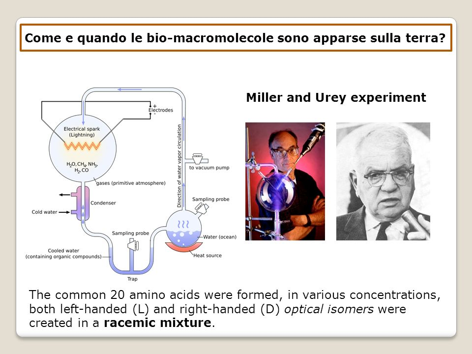Come e quando le bio-macromolecole sono apparse sulla terra