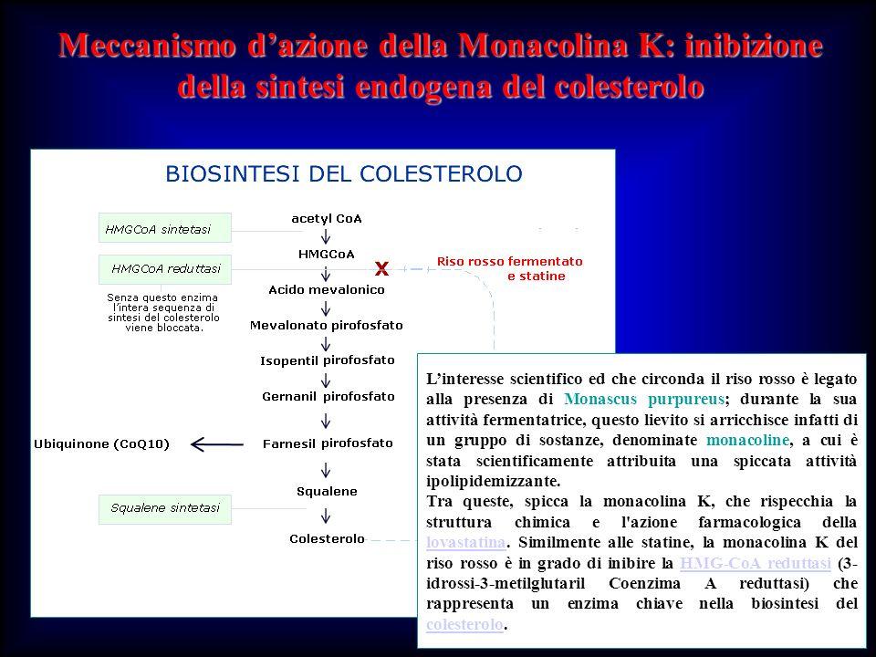 Meccanismo d'azione della Monacolina K: inibizione della sintesi endogena del colesterolo