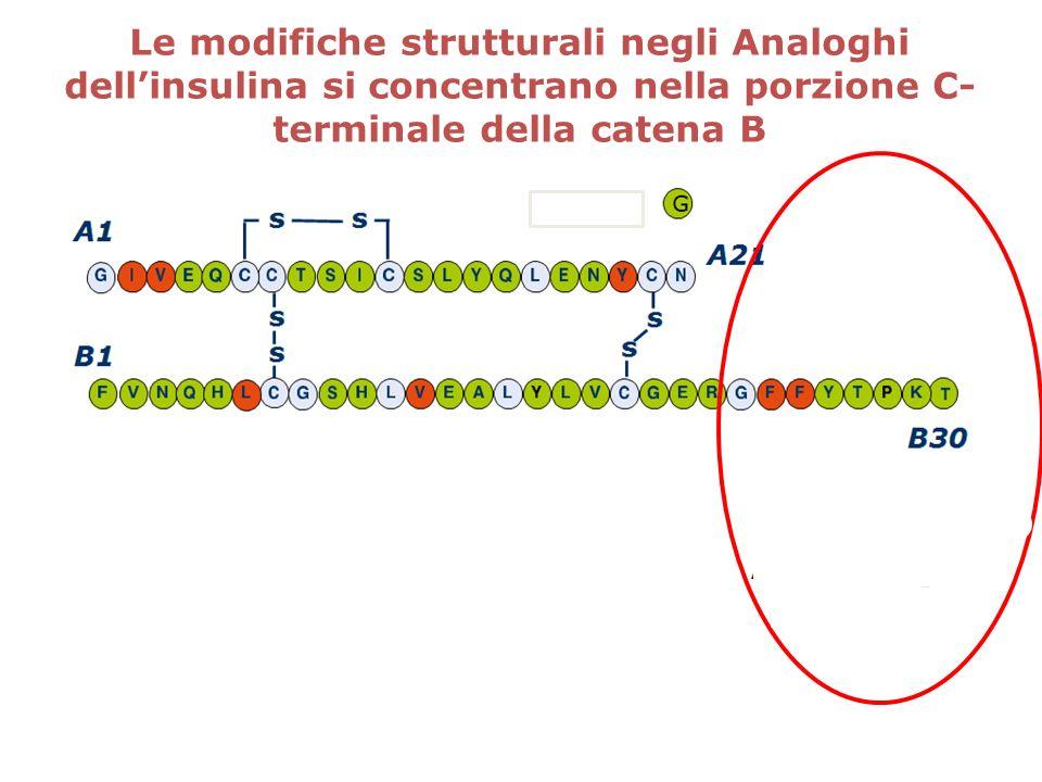 Le modifiche strutturali negli Analoghi dell'insulina si concentrano nella porzione C-terminale della catena B