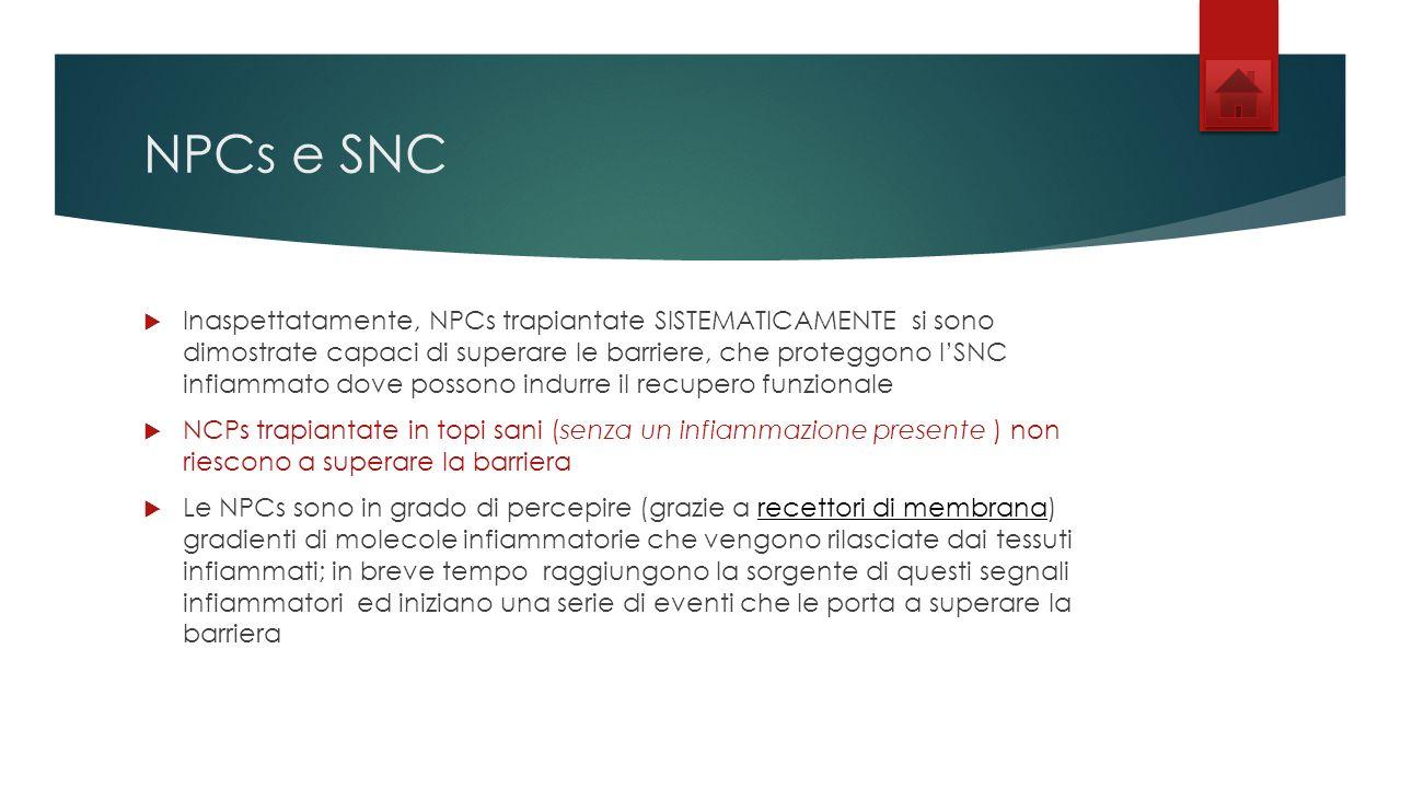 NPCs e SNC