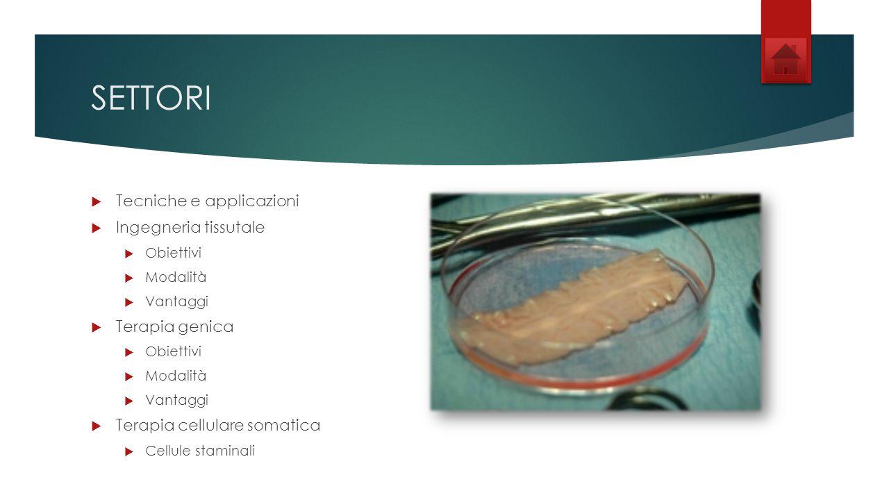 SETTORI Tecniche e applicazioni Ingegneria tissutale Terapia genica