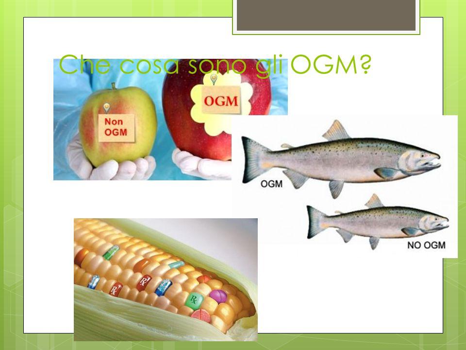 Che cosa sono gli OGM